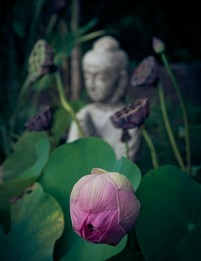 Yoga pranayama and nidra photo №0