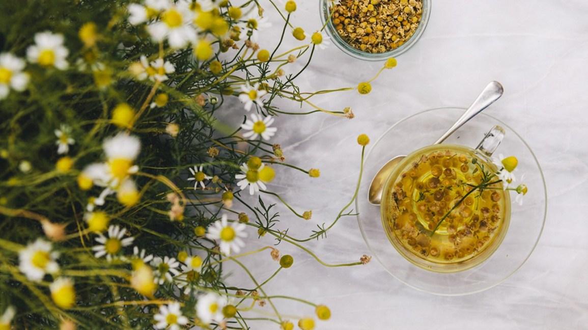 Herbs for Immune Health photo №0
