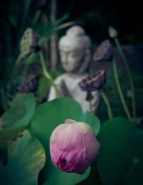 International Day of Yoga photo №0